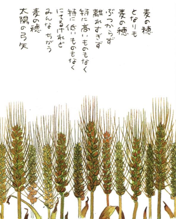 星野富弘「麦の穂」